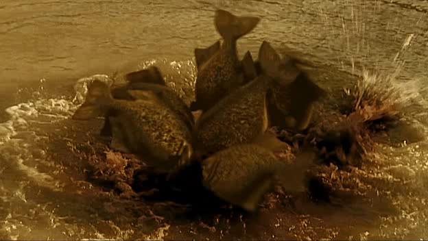 Mega Piranha (2010) – That Was A Bit Mental