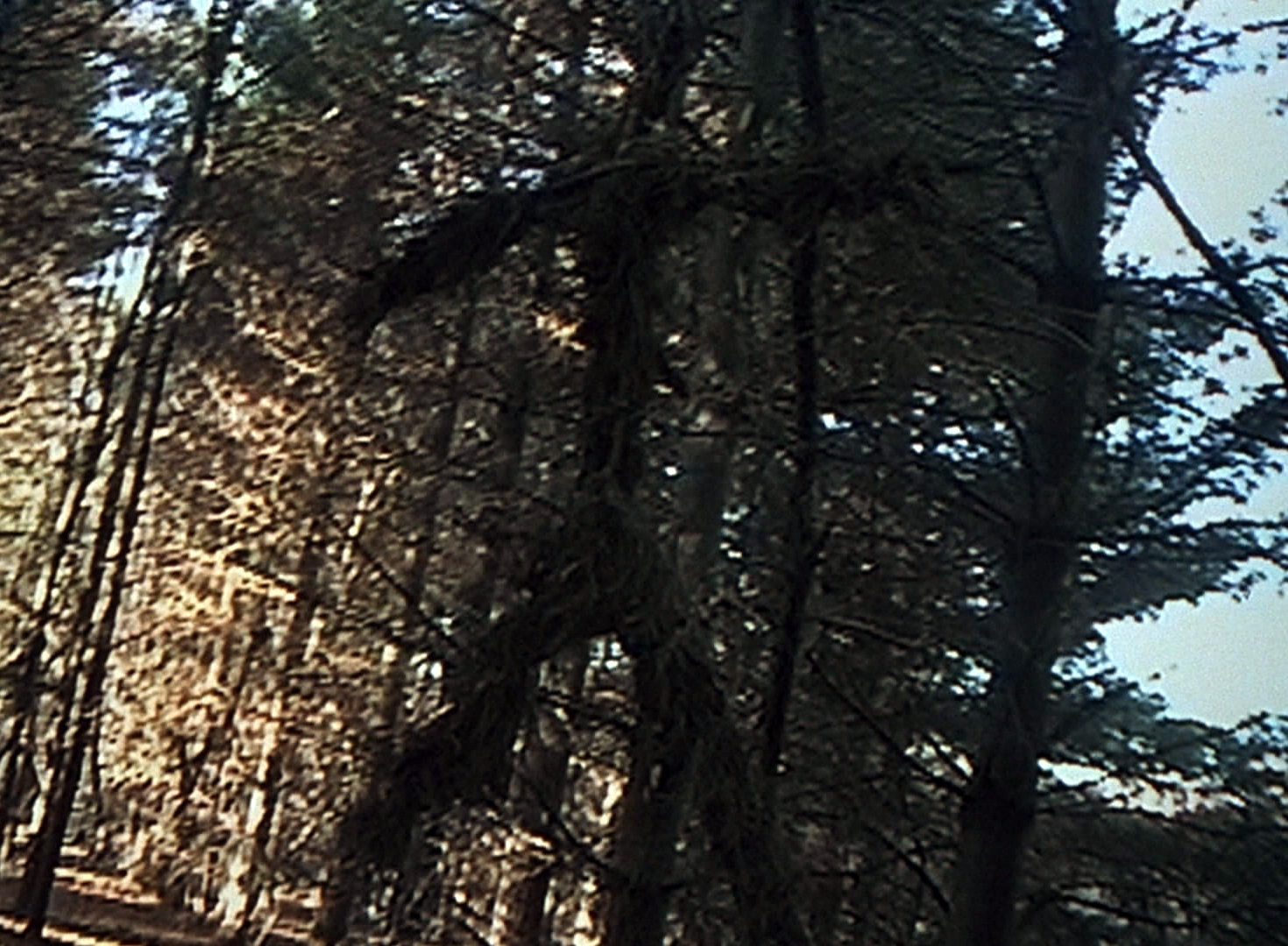 blair witch project location Going into blair witch, my question was the same as everyone else's: how do you make a 17-year-old phenomenon feel fresh when it was first released in 1999, the blair witch project was like.