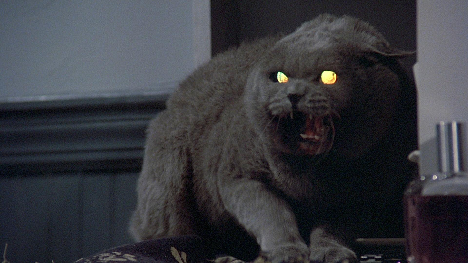 Resultado de imagem para Pet Sematary 1989